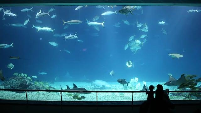 컨딩 국립해양생물관 01