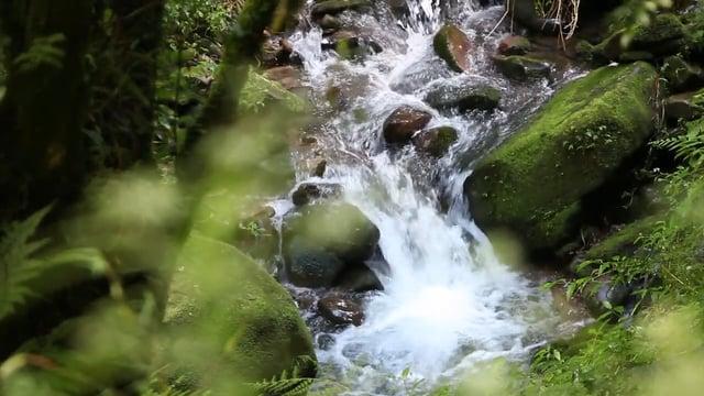 타이중 삼림계 계곡