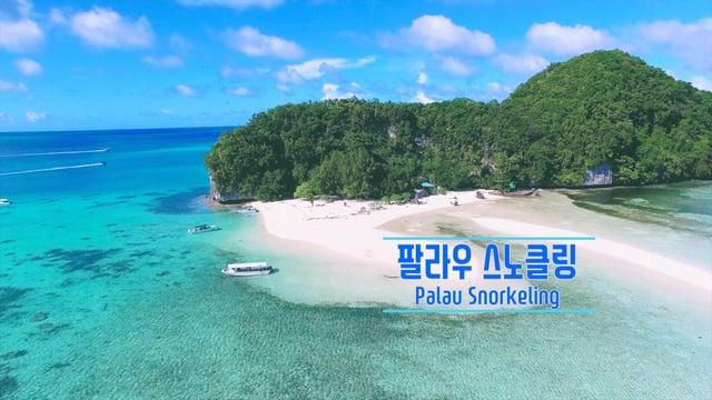 [팔라우여행]팔라우 스노클링 즐기기, Palau Snorkeling/ 스티커, 하나투어